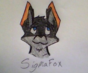SigmaFox's Head Image