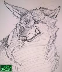 (Gift Art) 5 min pen doodle for Bearpaw