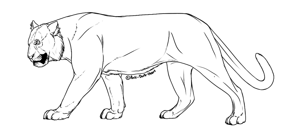 Tiger Lineart