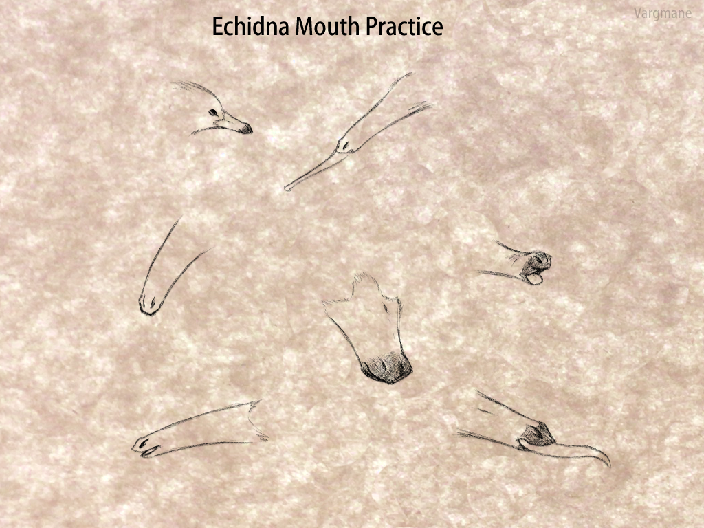 Echidna Mouth Practice