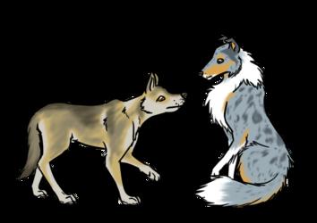 Saarloos wolfdog & merle collie