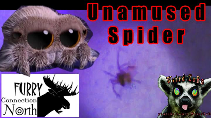 Spider Boy FCN 2009