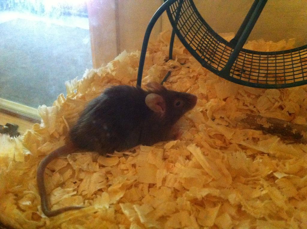 Kappa the mouse