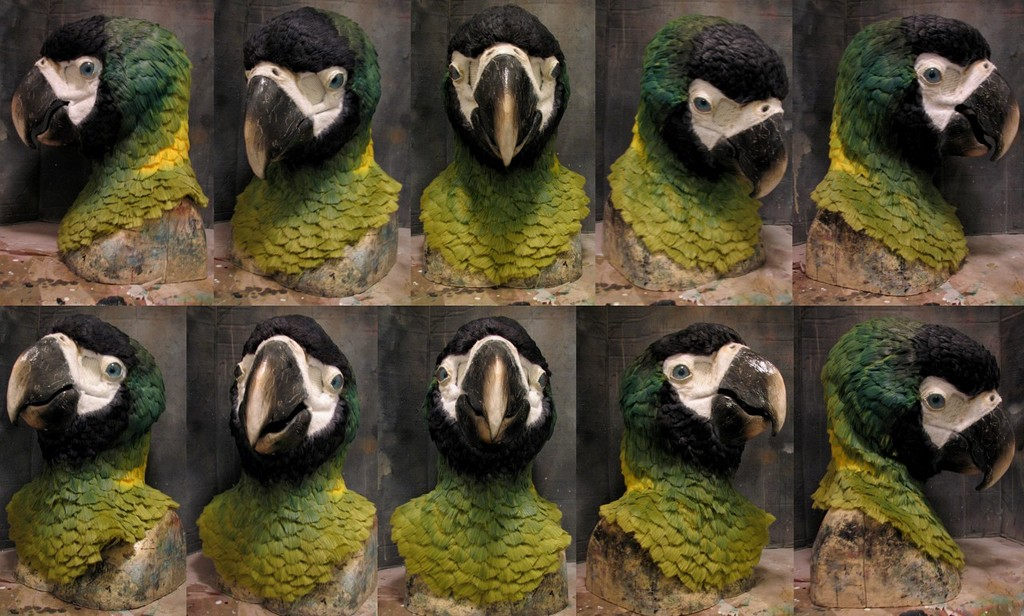 Golden Collared macaw mask