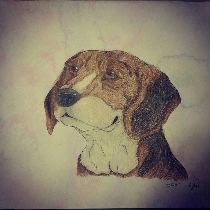 Beagle Art Trade