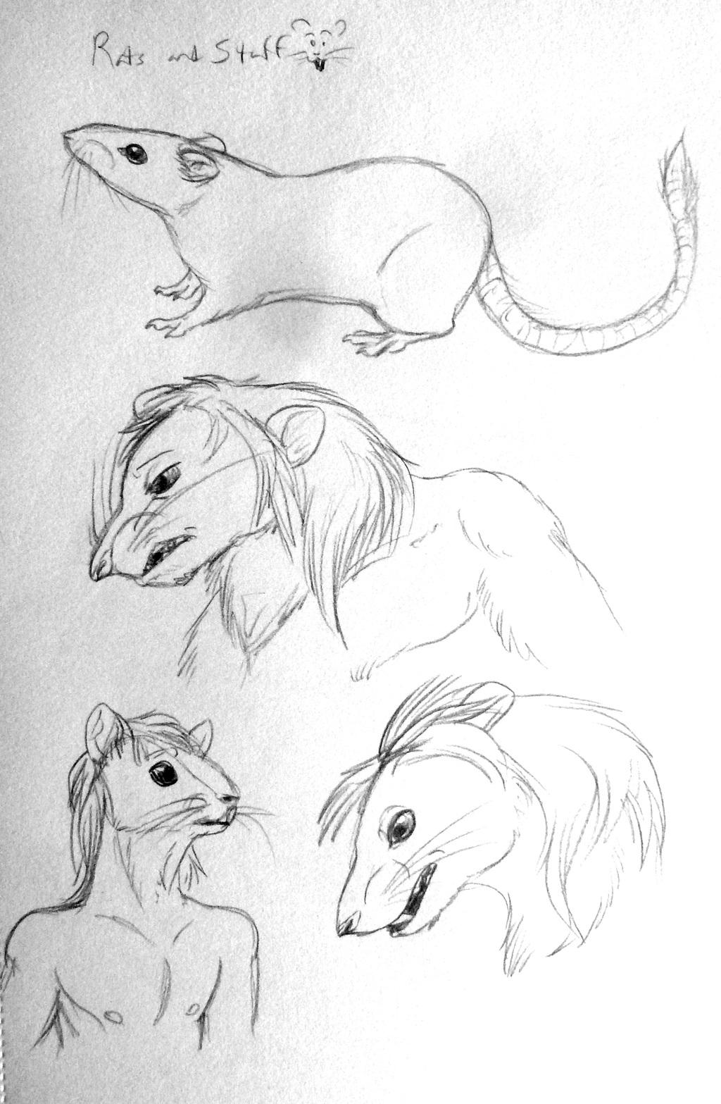 Sketchdump--Rats!!!