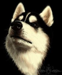 Speed paint practice - Husky