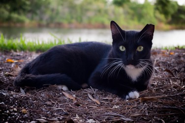 Megaplex Cat