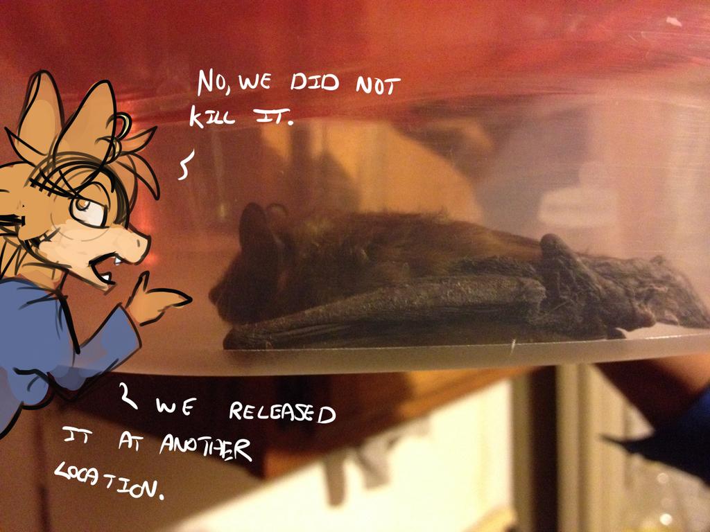 Brown Bat Intruder
