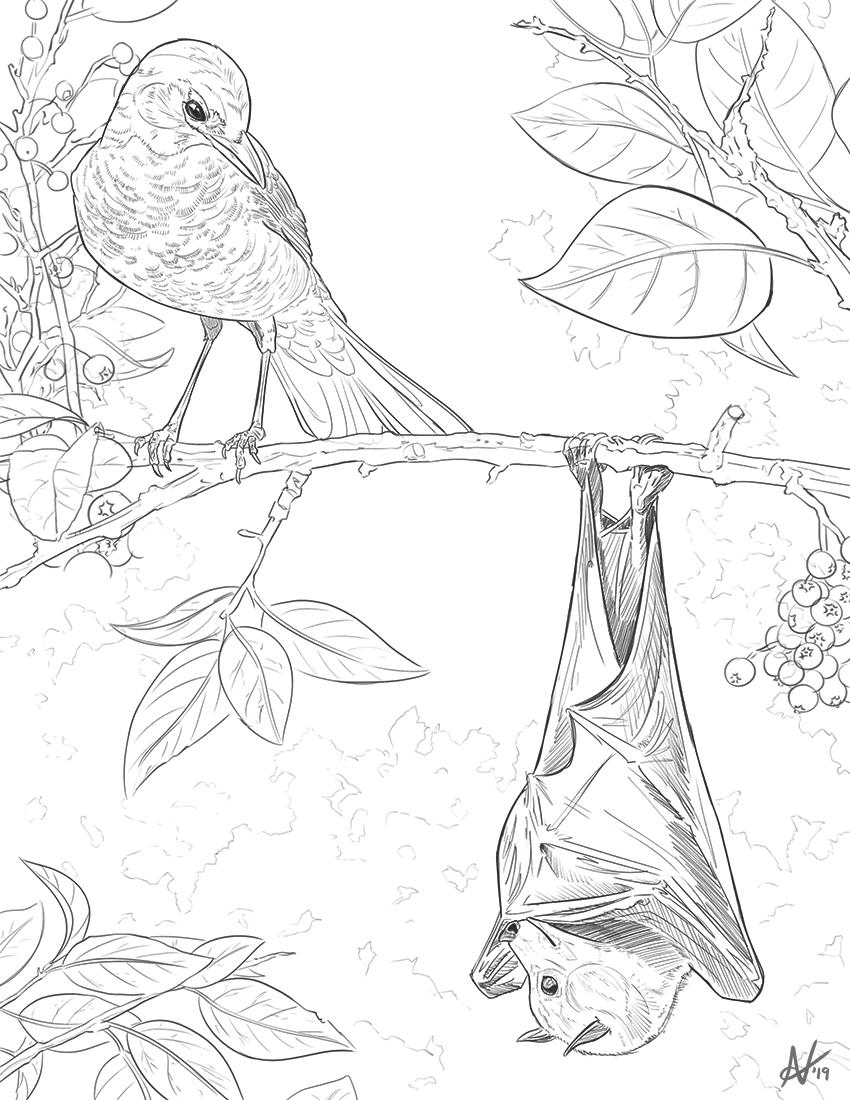 Bat N Robin Sketch
