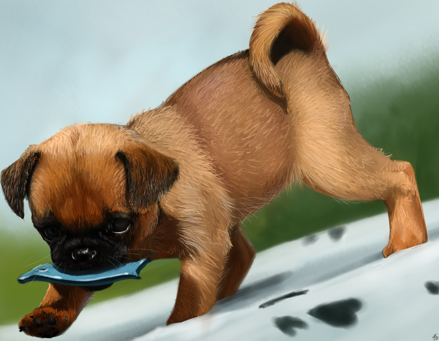 Archibal - Puppy study