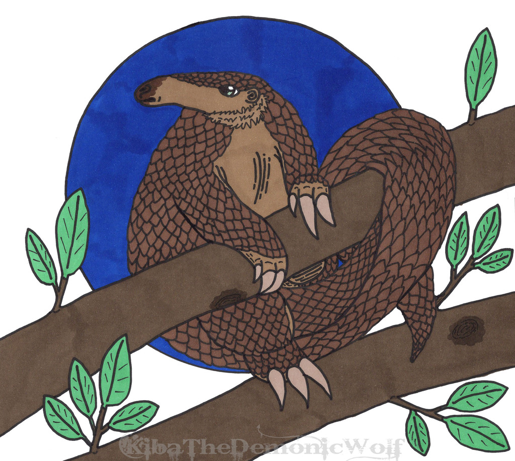 World Pangolin Day 2020