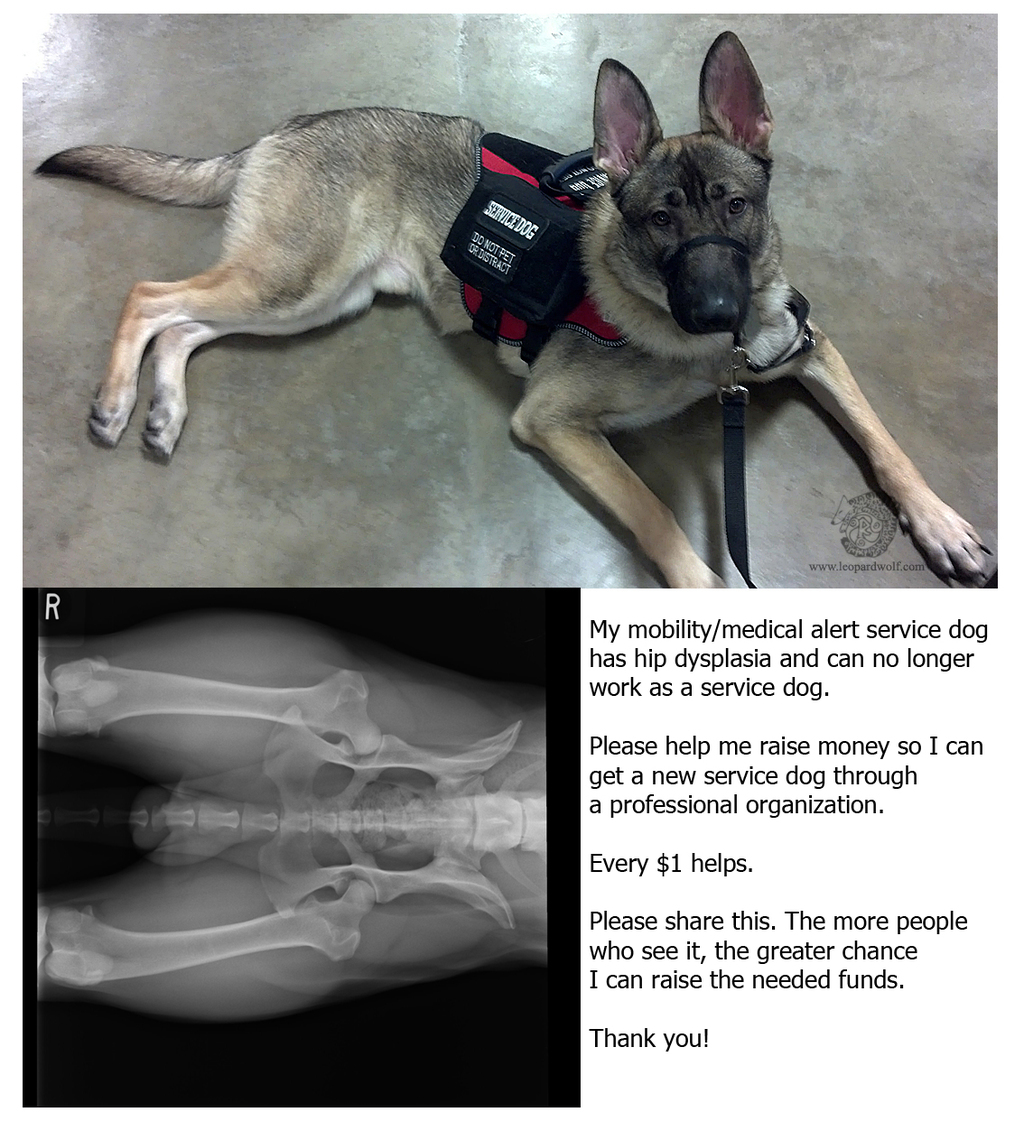 Service Dog - Help Needed