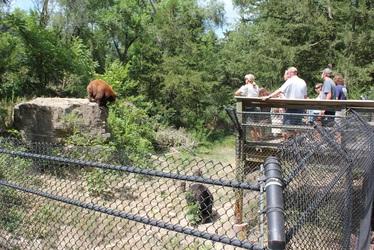Bear View