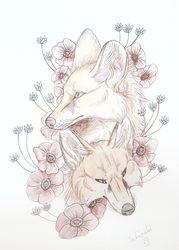 foxes and poppys