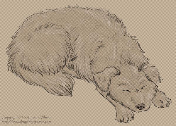 Kennel Dog 3