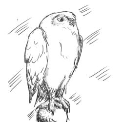 [untitled owl]