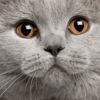 avatar of Chance_99