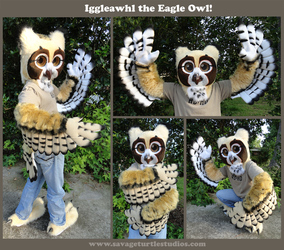 Iggleawhl the Eagle Owl -- 2012