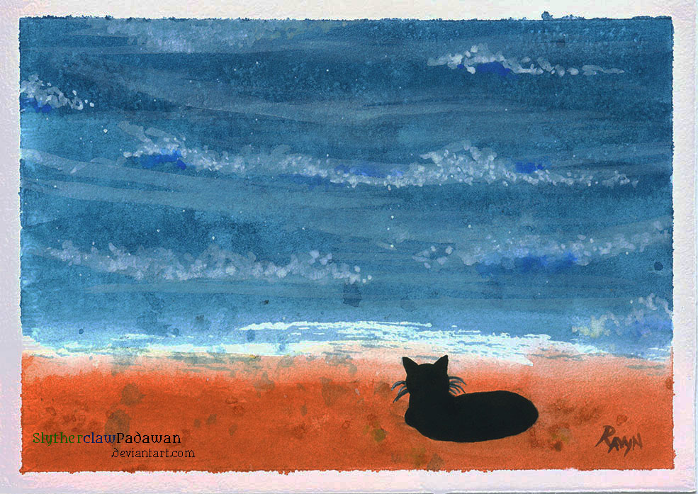 Most recent image: Cat On the Beach