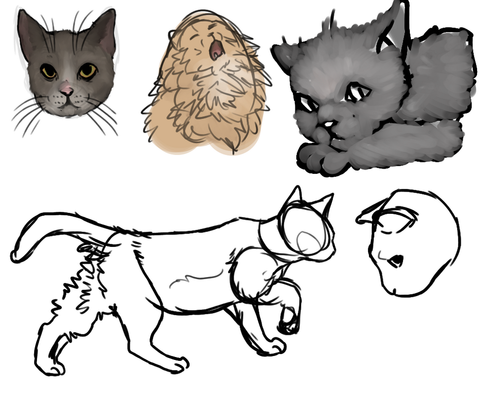 Most recent image: Kitty Sketches
