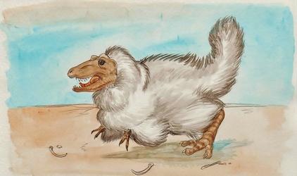 White Rex Chick