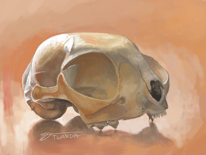 Ambient Cat Skull [3DS]