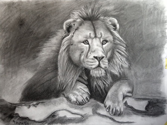 The Lion....King?