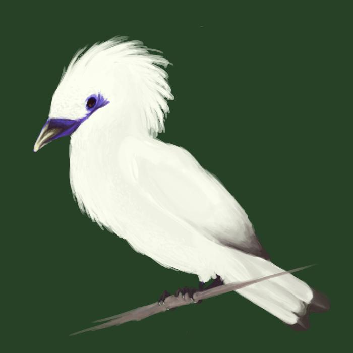 Mynahbird Mynahbird