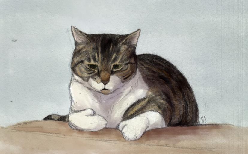 [2014] grumpy cat