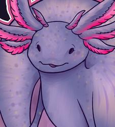 Axolotl, pure heart