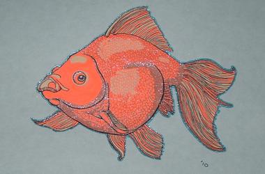 Shiny Goldfish