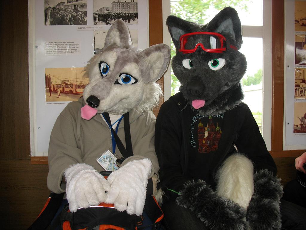 Wolves in old tram