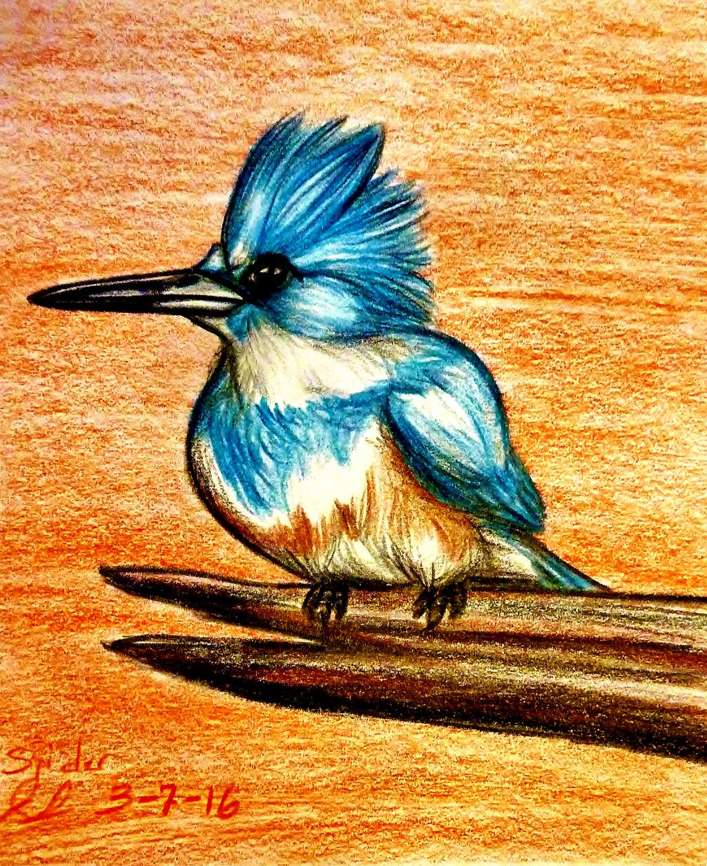 Kingfisher Sketch — Weasyl