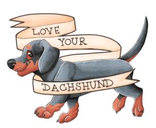love your dachshund