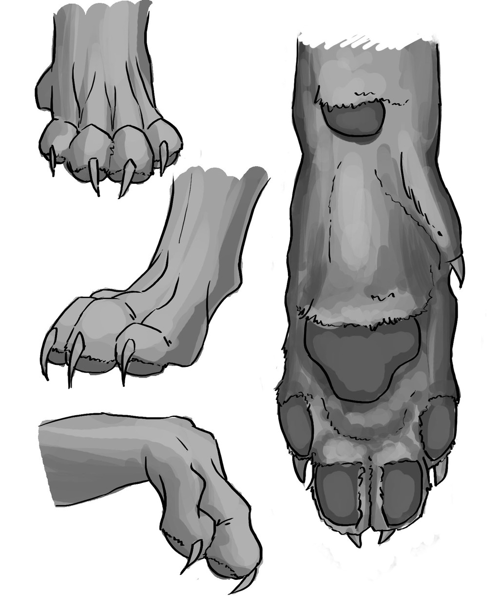 Most recent image: paws study/reference