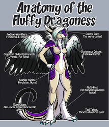 anatomy of the fluffy dragoness