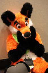 Foxes - MFF 2012