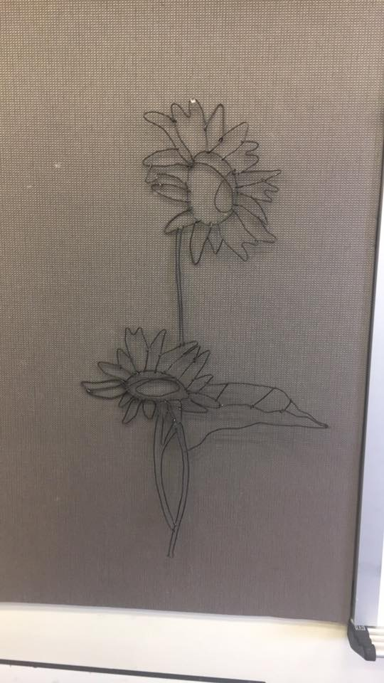 Most recent image: sunflowers