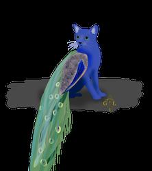 Peacock + Cat