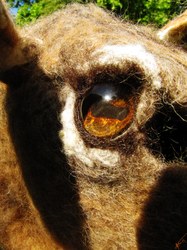 Deer Eye Detail