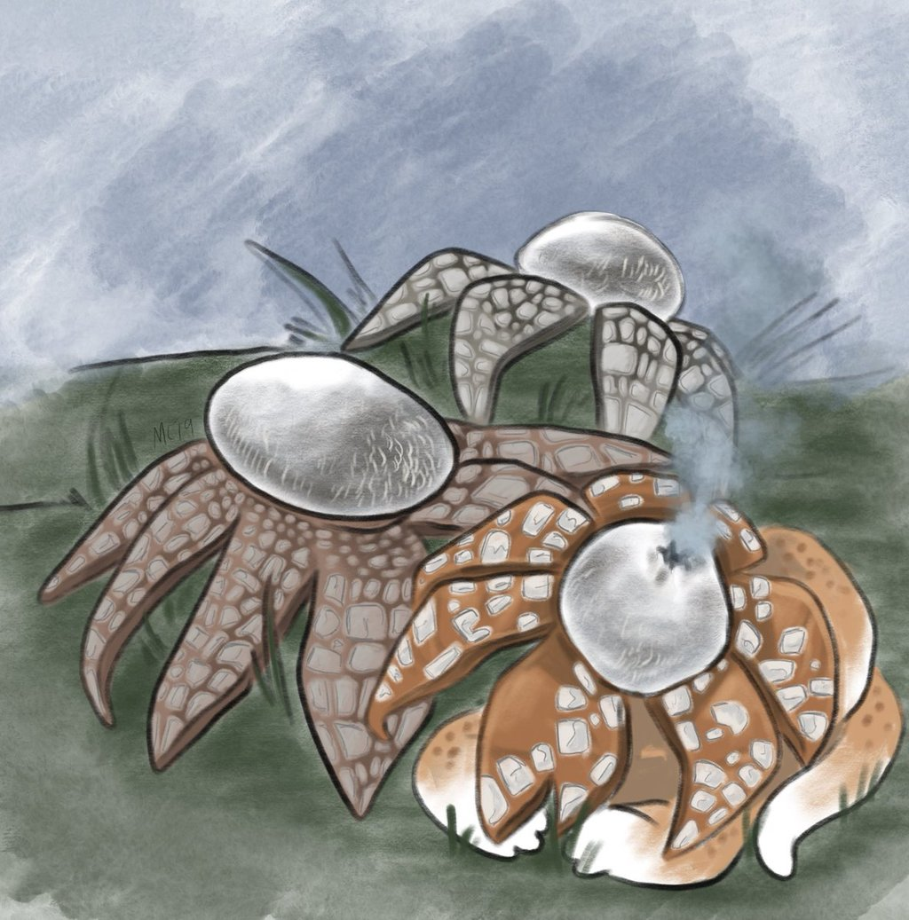 Mayshroom Earthstar