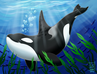 Orca Luv <3