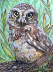 Owlet ACEO