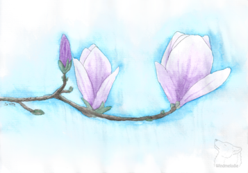 Little Magnolia -gift-