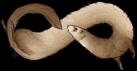 [2013] Infinity Ferret