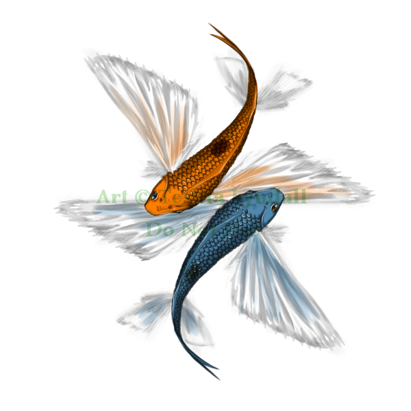 Most recent image: Flying Fish