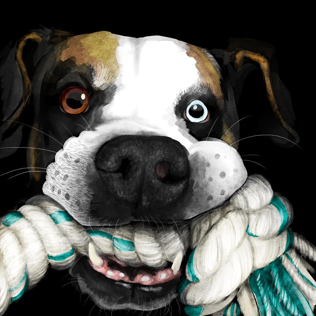 Pet Portrait - Samson