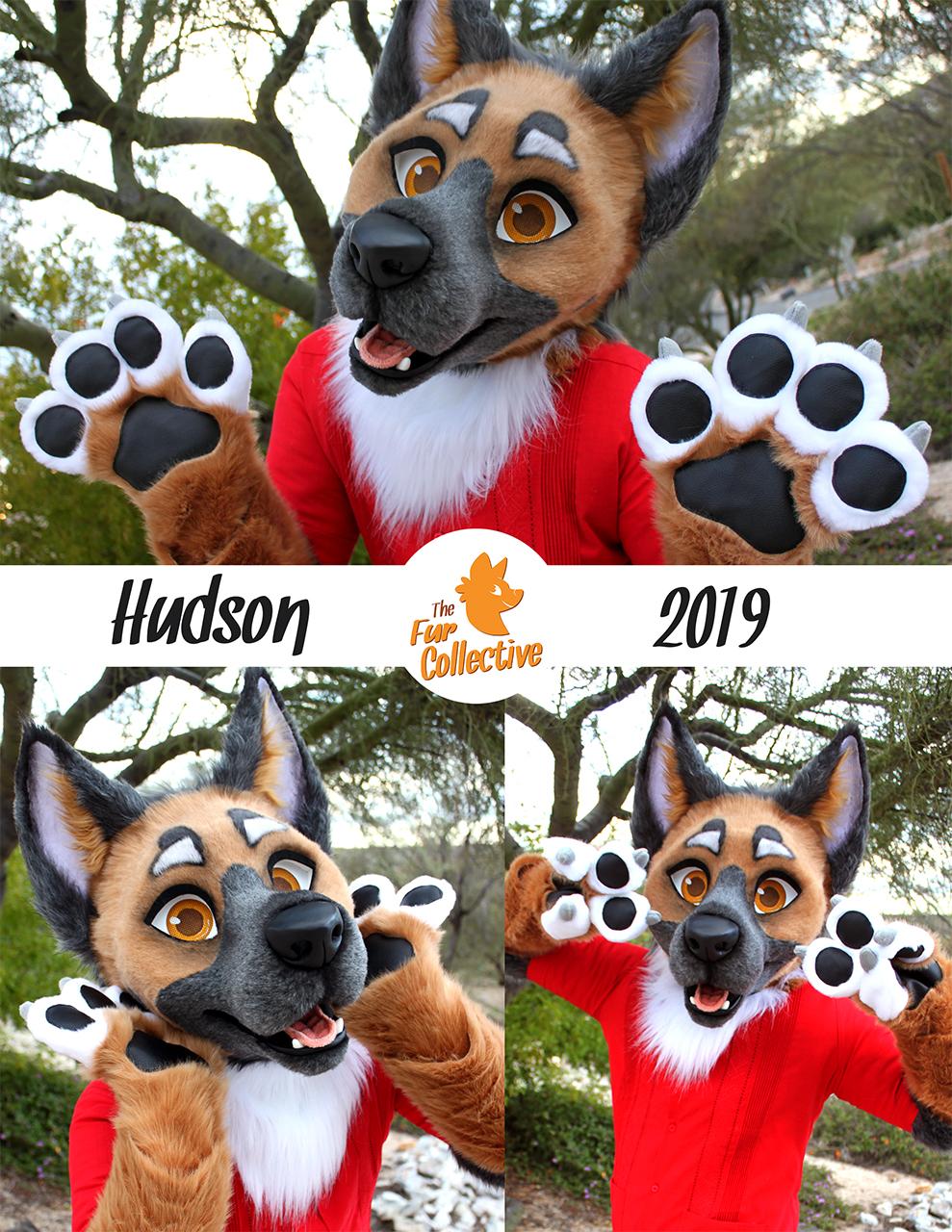 Hudson the Shepherd!