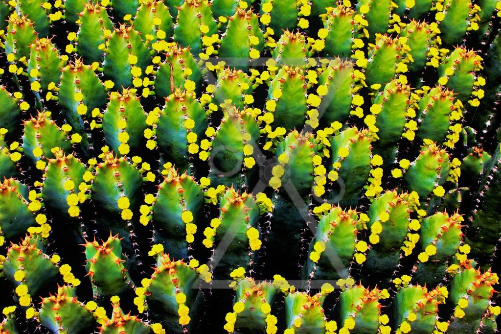 Cactus arms